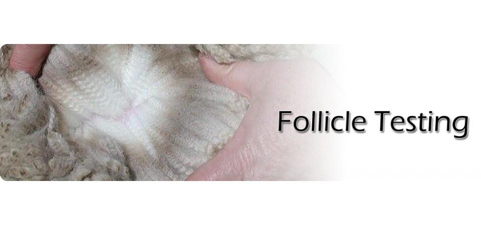 follicle testing